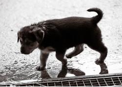 puppy-557835_640