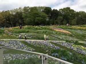 里山ガーデン お花畑